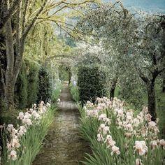 #trädgård #garden #gardening #have #hage #jardin #instagarden #instagardenlovers #flower #fleurs #fleur #iris #instaflower #instagardening