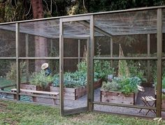 Screened in garden with raised beds. Keeping out birds, large bugs, dogs, and chickens #largevegetablegardeningideas