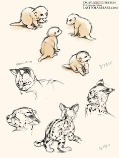 Daily Animal Sketch – Meerkat kits and Serval kittens – Last of the Polar Bears