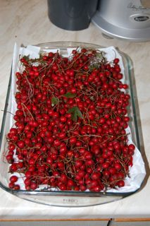 Hawthorn Berry Jelly: Serve with cheese or meats, 1 1/2 pounds of hawthorn berries are needed to make 1 jar.