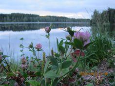 Sognsvann Love You, My Love, Norway, Plants, Life, My Boo, Je T'aime, Te Amo, Flora