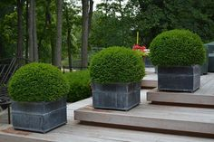 44 Best Shrubs for Containers Boxwood is the most versatile shrub, it grows almost everywhere in all the continents.The most adaptable and easy to grow shrub, boxwood is landscapers' favorite and without a doubt one of the best shrubs for the containers. Boxwood Planters, Boxwood Landscaping, Backyard Landscaping, Evergreen Planters, Fall Planters, Modern Planters, Landscaping Ideas, Garden Shrubs, Garden Pots