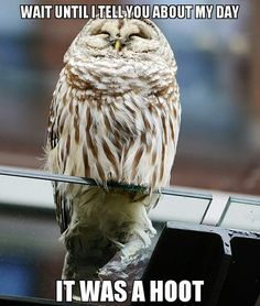 Owl Meme #Hoot, #Wait