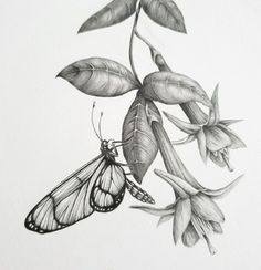 Nature Sketches Pencil, Landscape Pencil Drawings, Pencil Drawings Of Flowers, Pencil Sketch Drawing, Pencil Art Drawings, Art Drawings Sketches, Animal Drawings, Charcoal Drawings, Drawing Ideas