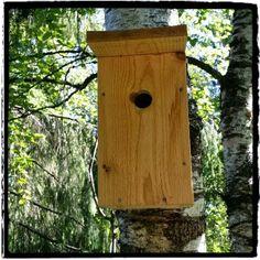 Mitt liv som Toril :o): Superkoselig fuglekasse oppdatering