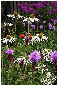 Gartenblogs und Gartentipps