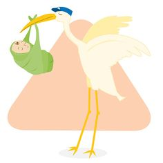 Baby Instructional Illustrations - Pelican Illustrated by Heather Martinez Creative Designs