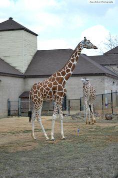Como Zoo (:
