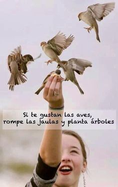 If you like birds, break the cages and plant trees. #Aves #LiberaciónAnimal #Ecologismo