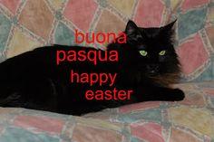 gatta ciccia ( pagina / page fb ) Google+