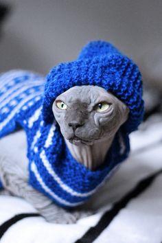 Loki ready for winter