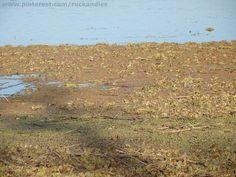 Laguna Mulitas 25 de Mayo