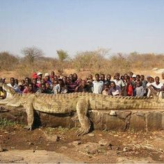 Now that is 2500 lbs and 22 ft long and ate people.