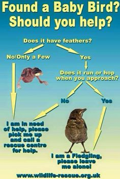 Found a baby bird? Here's a guide on how to help Animal Activist, Make A Change, The More You Know, Pick Me Up, Dog Friends, Pet Care, Pet Adoption, Animal Adoption, Animal Rescue