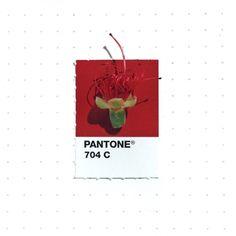 Pantone Matching System, Pantone Swatches, Wedding Bottles, Flower Garden Design, Color Psychology, Colour Schemes, Colour Palettes, Color Trends, Colour Board