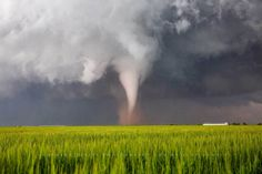 Title: Lucky Day. A beautiful white tornado spins up dust over a wheat field on a spring day in Texas. Storm Photography, Texas Photography, Wall Art Pictures, Print Pictures, Fine Art Photo, Photo Art, Pictures Of Lightning, Storm Images, Wheat Fields