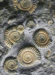 Fossilized seashells