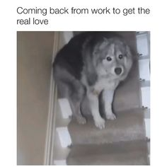 Video by unknown 🎥 DM for credit Funny Animal Jokes, Funny Animal Pictures, Animal Memes, Cute Funny Dogs, Cute Funny Animals, Cute Animal Videos, Cute Little Animals, Cute Dogs And Puppies, Animals Beautiful