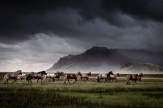 Icelandic horses in a terrific rain storm!