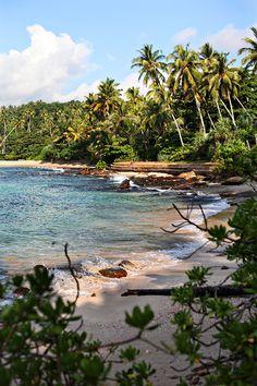 the south coast of Sri Lanka by line x shape x colour