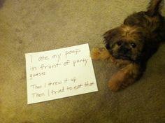Party Pooper--Dog Shaming website. Hilarious!