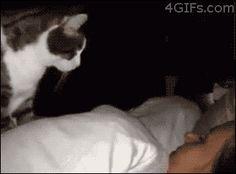 BBC Teen mačička