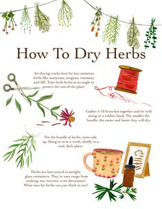 green witchcraft madisonsaferillustration: A how to for drying herbs. There are tons of methods, as everything in herbalism. This one works well for me! Green Witchcraft, Witchcraft Herbs, Herbal Magic, Baby Witch, Modern Witch, Witch Aesthetic, Healing Herbs, Drying Herbs, Book Of Shadows