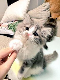 We Heart It 経由の画像 https://weheartit.com/entry/160161776 #animals #cat #cute #kitten