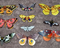 Moth Magnets Set of 10 Insects Multi Color Gifts Refrigerator Magnets Kitchen Decor Home Decor inches bedroom Decor Bathroom Decor Types Of Moths, Refrigerator Magnets, Creative Art, Insects, Kitchen Decor, Bedroom Decor, Ceramics, 6 Inches, Metal