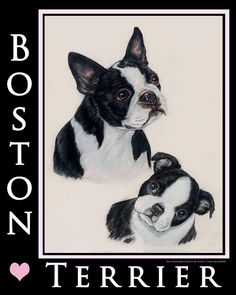 Boston Terrier glass cutting boards 12x15 by TheCopperMare on Etsy