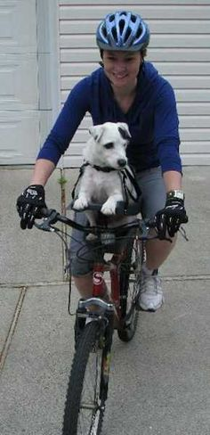 New design idea, center mounted, comfortable and safe bike seat for a pet