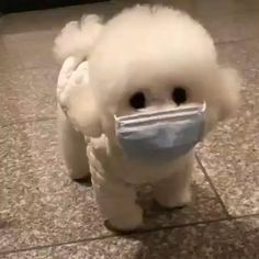 #dog #cute #protectivemask #cute #bemorepanda Cute White Puppies, Cute Baby Puppies, Super Cute Puppies, Toy Poodle Puppies, Bulldog Puppies, Baby Animals Super Cute, Cute Little Animals, Baby Animals Pictures, Cute Animal Pictures