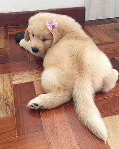 Fluffy golden butt