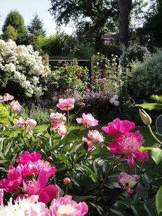 Peonies Bowl of Beauty and Rambling Rector Rose