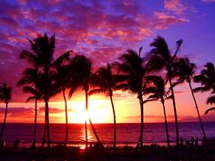 Palm Trees and the Sunset.... My two favorite things in one picture <3