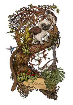 """Endemica"" Saguinus oedipus y Catasetum Tabulare Mammals, Nature, Science, Art, Tattoos, Memes, Naturaleza, Patterns, Animaux"