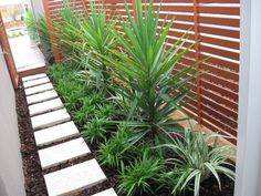 Tips for your side yard makeover Side Yard Landscaping, Succulent Landscaping, Tropical Landscaping, Pool Landscaping Plants, Tropical Backyard, Landscape Design Plans, House Landscape, Seiten Yards, Garden Makeover