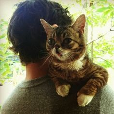"""Meet Lil Bub, Nature's """"Happy Accident"""" Who Is About To Win Your Heart"""