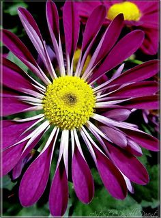 Happy Flowers, Purple Flowers, Beautiful Flowers, My Flower, Flower Power, Planting Sunflowers, Thing 1, Brighten Your Day, Daisies