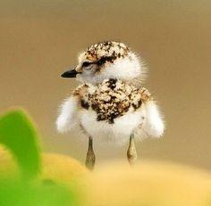Baby bird via Paradise of Birds on Facebook