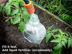 Slow release watering - plastic bottles, with just a few holes buried next to your plants. For containers or raised beds. Good alternative to a drip hose, esp for remote locations.