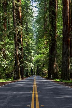 wallpaper nature Road Print featuring the photograph Avenue Of The Giants by Rick Pisio Backgrounds White, Photo Backgrounds, Beautiful Nature Wallpaper, Beautiful Landscapes, Cool Wallpapers Nature, Landscape Photography, Nature Photography, Photography Props, Beautiful Roads