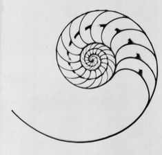 Nautilus Shell is a symbol for the inner beauty of nature, a symbol of life and… Spiral Tattoos, Shell Tattoos, Nautilus Shell, Life Symbol, Future Tattoos, Ink Art, Sacred Geometry, Tattoo Inspiration, Mehndi
