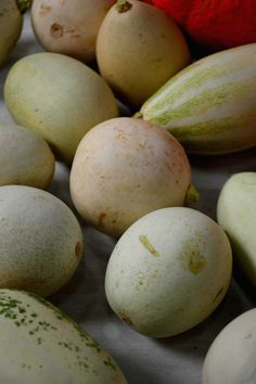 """""""Nest Egg"""" Gourd from 2014 National Heirloom Expo #theheirloomexpo"""