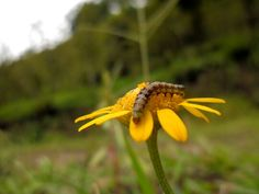 The caterpillar on the flower