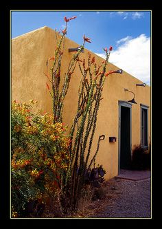 Adobe style in Tucson's Barrio