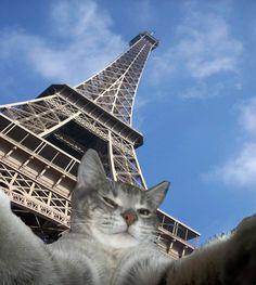 Le chat in Paris via @Expedia #FashionCat #Wanderlust