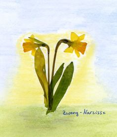 Waldorf ~ 5th grade ~ Botany ~ Daffodil ~ Flower Press Project ~ main lesson book Montessori Education, Waldorf Education, Kids Watercolor, Watercolor Painting, Lazure Painting, Daffodil Flower, Nature Table, Fifth Grade, Nature Crafts
