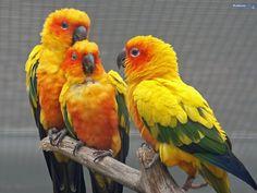 birds - the-animal-kingdom wallpaper