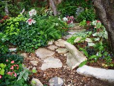 Shade garden path in early May - caladiums, ferns, ivy, impatients,